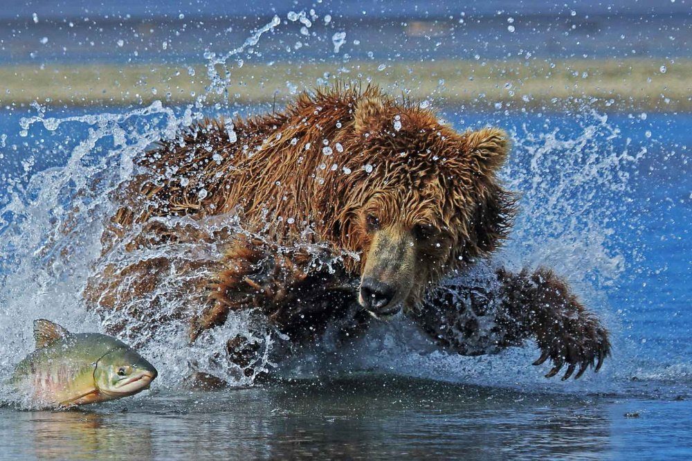 homer beren excursie.jpg