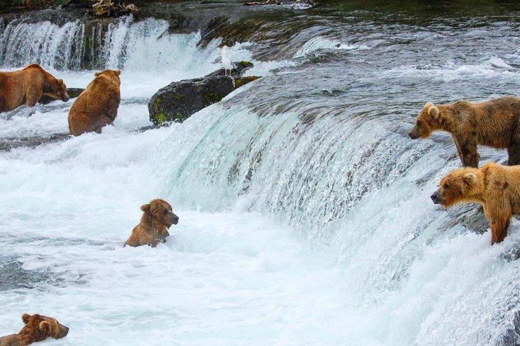 brooks falls alaska.jpg