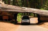 2907Sequoia[1]