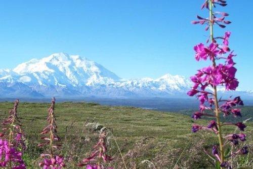 Langs de lodges van Alaska dag 06
