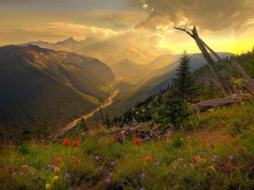 Mount Raineer National Park