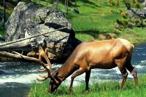 Yellowstone 005