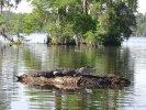 Swamp en Bayou Tour