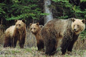 Jasper National Park  001