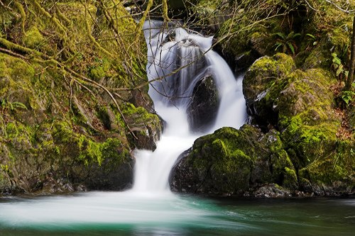 Olympic NP (Quinault) 001