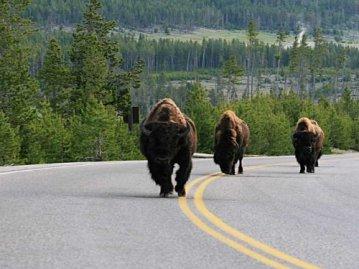 Yellowstone 004